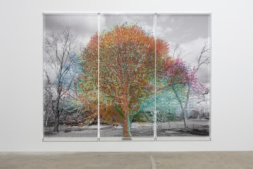 """Charles Gaines """"Numbers and Trees: Central Park Series II, Tree #10, Alexandro,"""" 2018 Black and white photograph, acrylic on plexiglass 3 panels overall, (2) 95"""" H x 42"""" W x 5.75"""" D (1) 95"""" H x 42.50"""" W x 5.75"""" D overall approximately 95"""" H x 127.50"""" W x 5.75"""" D Inventory #GAI354 Courtesy of the artist and Vielmetter Los Angeles Photo credit: Fredrik Nilsen"""
