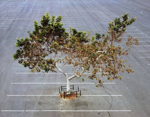This is an artwork titled My Lonley Tree by artist Joel Tauber made in 2006