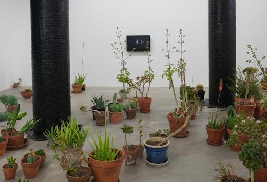 Rodney McMillian: Succulent Installation view