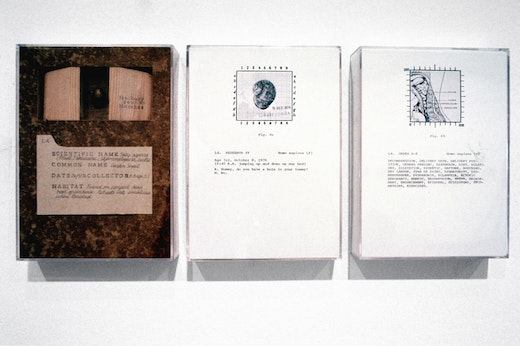"""This is an artwork titled """"Post-Partum Document: Documenation V, Classified Specimens, Proportional Diagrams, Statistical Tables, Research and Index,""""  Detail by artist Mary Kelly made in 1977"""