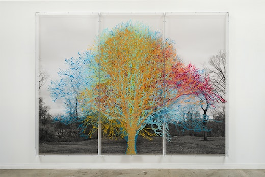 This is an artwork titled Numbers and Trees: Central Park Series II: Tree #6, Fredrick by artist Charles Gaines made in 2016